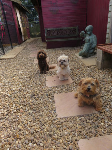PHOTO: 3 dogs waiting patiently