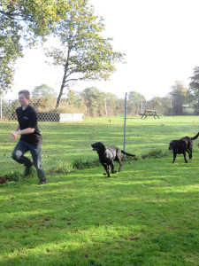 PHOTO: 2 black labradors chasing Kyle