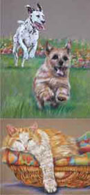Paintings of dogs & cats at Collaton Kennels