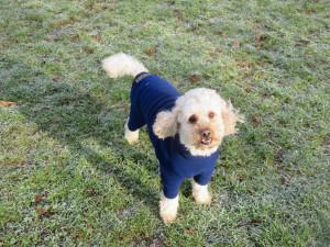 PHOTO: Cute dog in coat