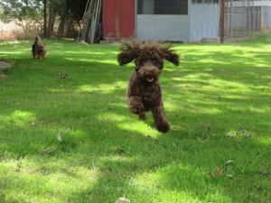 PHOTO: Bouncy dog enjoying pet creche