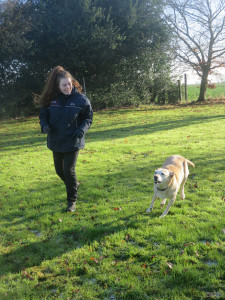 PHOTO: Labrador going for a walk at pet creche