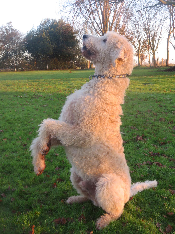Dog Kennels Wales