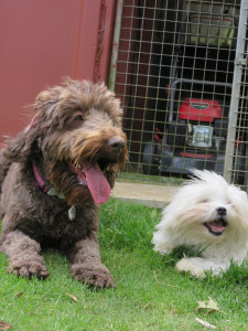 PHOTO: 2 Happy dogs