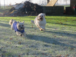 PHOTO: 2 healthy & happy dogs running