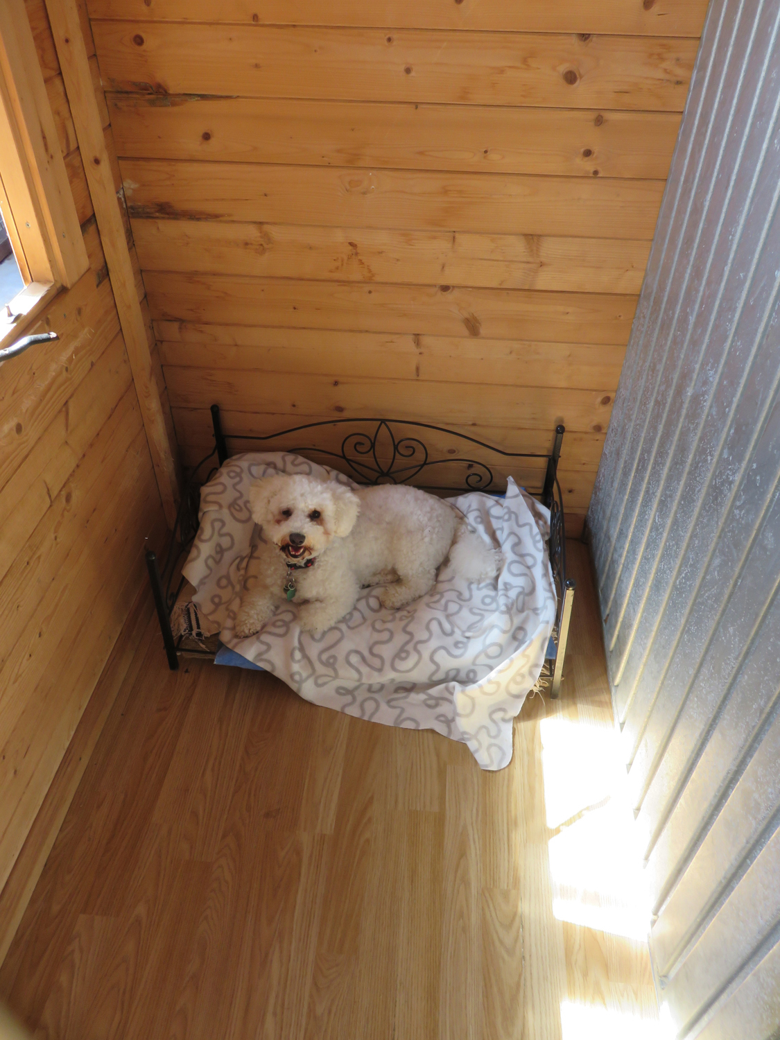 PHOTO: Small dogs have their own kennel block