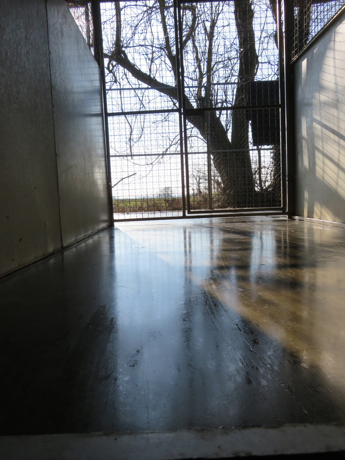 PHOTO: View from the exterior run of one of our kennels