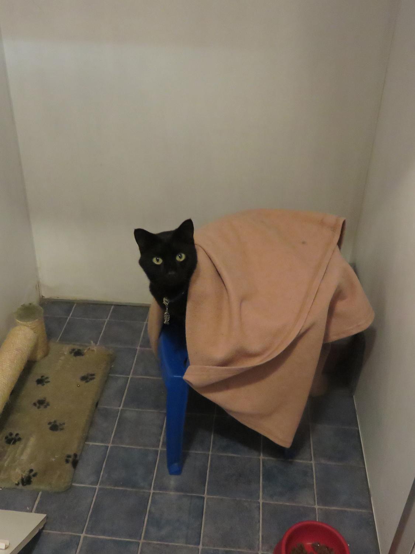 PHOTO: Cat in cat cabin