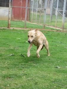 PHOTO - Dog racing towards camera