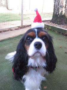 PHOTO tiny Christmas hat on a cute dog