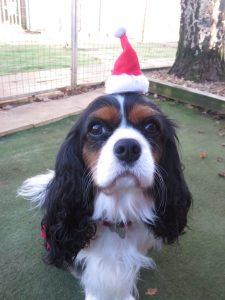 PHOTO tiny Christmas hat on a cute dog