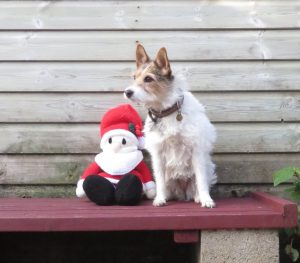 PHOTO a jack Russell sitting with Santa clause