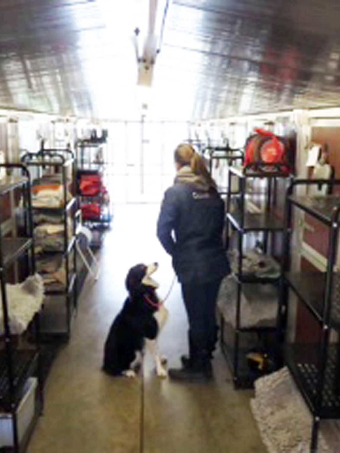 PHOTO - Internal view of kennel block